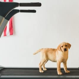 How to Train Your Dog on a Treadmill